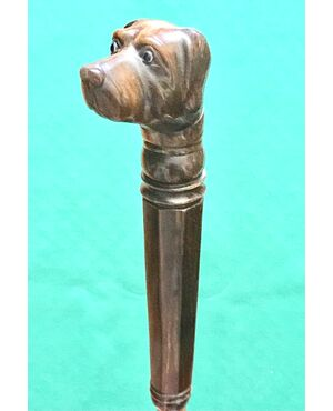 Bastone da passeggio con pomolo in corno raffigurante testa di cane.Canna in malacca.